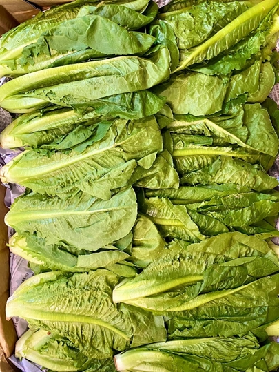 Picture of XÀ LÁCH ROMAINE BABY ( 500gr)