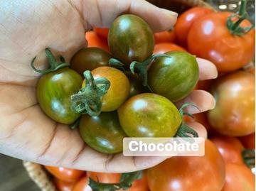 Hình ảnh củaCÀ CHUA CHOCOLATE (500gr)